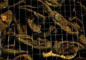 """Pokaż powiększenie powyżej: Ekspozycja butów ofiar """"Akcji  Reinhardt"""" - Państwowe Muzeum na Majdanku"""